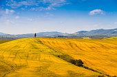 Fields in Tuscany, Italy