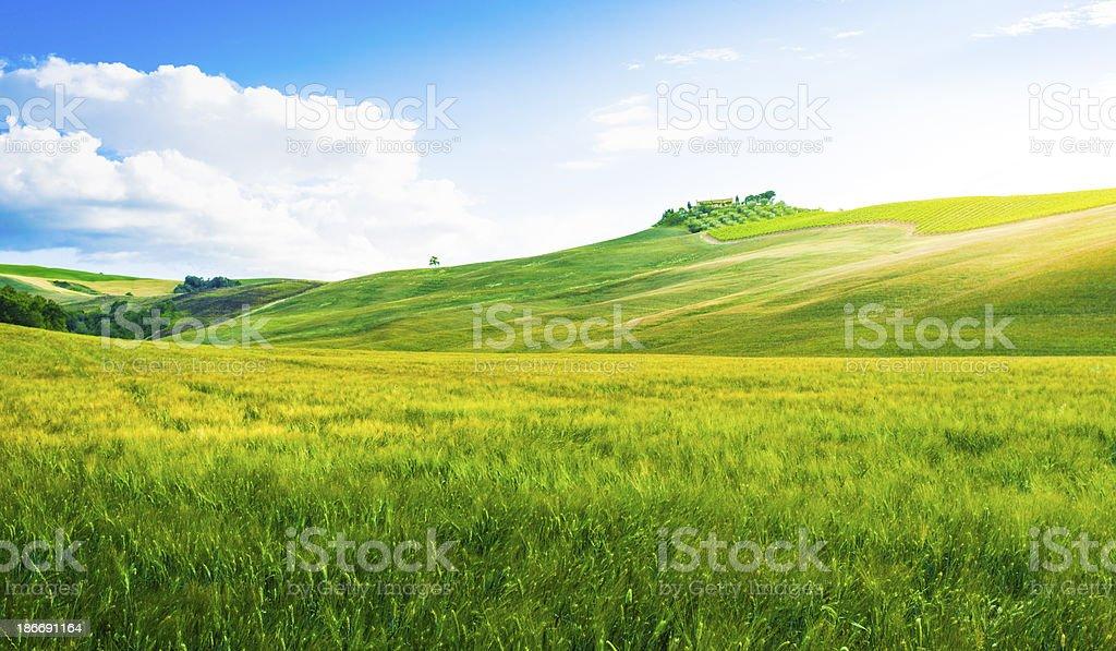 Fields in Tuscany stock photo