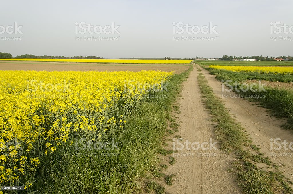 Fields landscape royalty-free stock photo