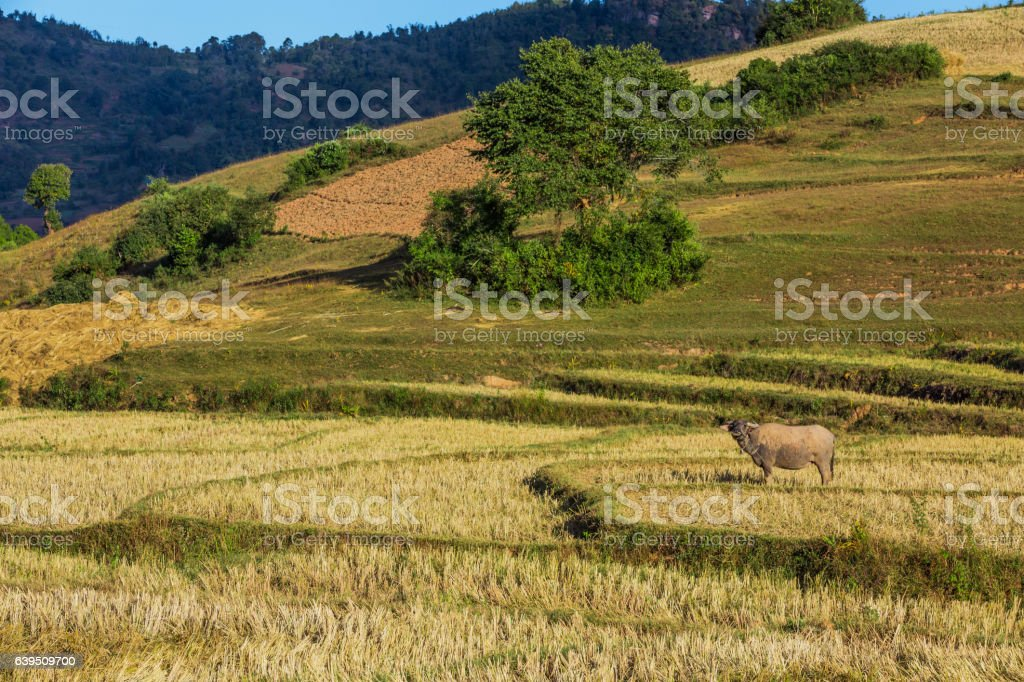 fields landscaped Shan state Myanmar stock photo