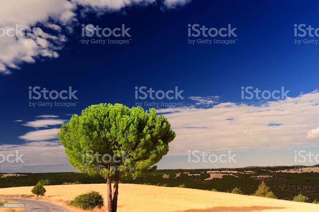 fields of Castille - foto de stock