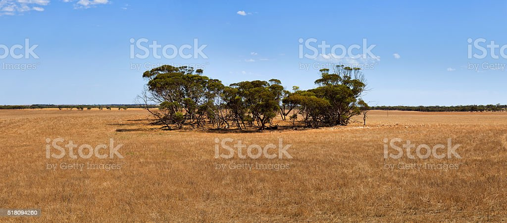 SA fields of gold and trees stock photo
