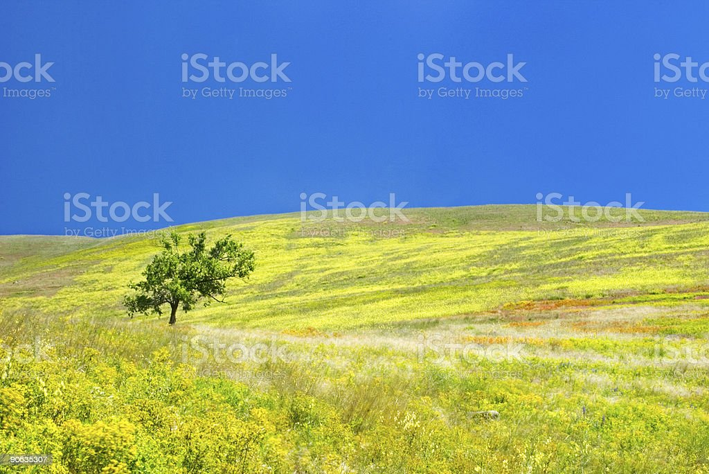 Fields of Gold II royalty-free stock photo