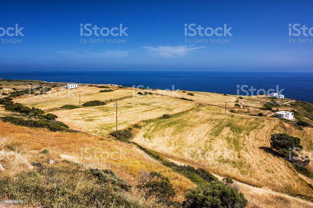 Fields of gold, Milos Greece stock photo