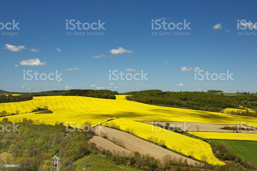 Fields of rape royalty-free stock photo