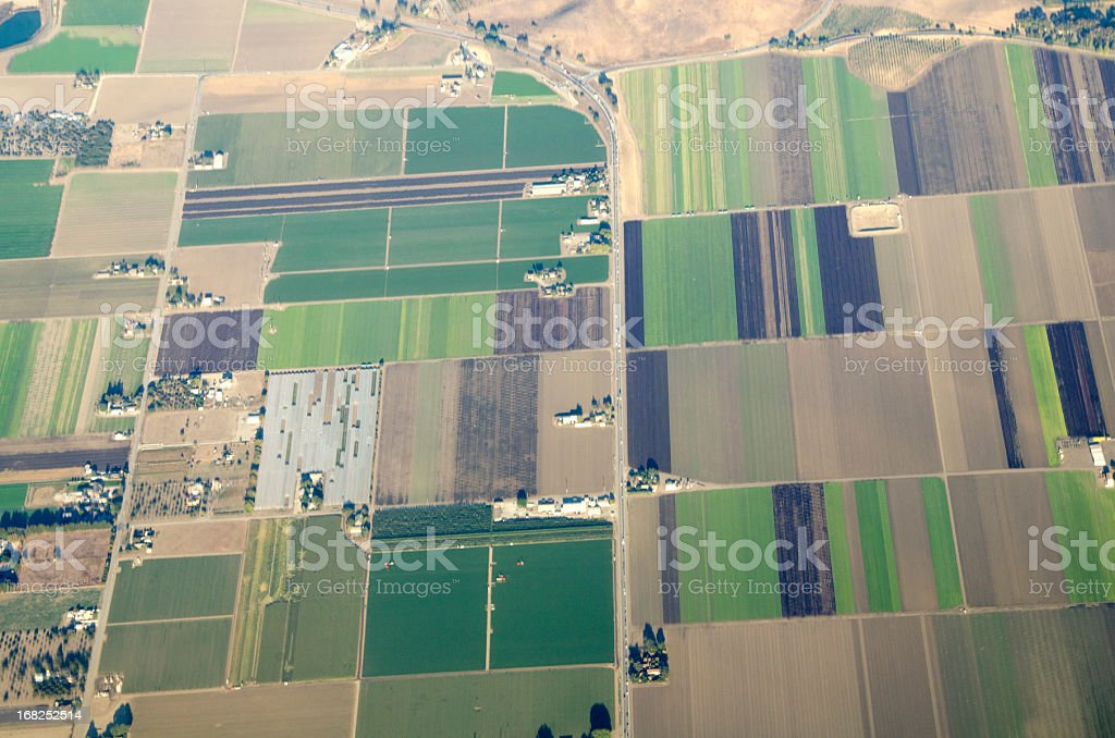 fields of salad greens stock photo