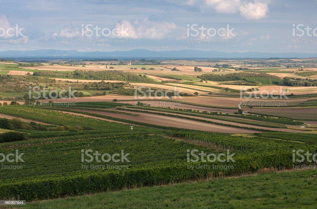 fields of South Moravia stock photo