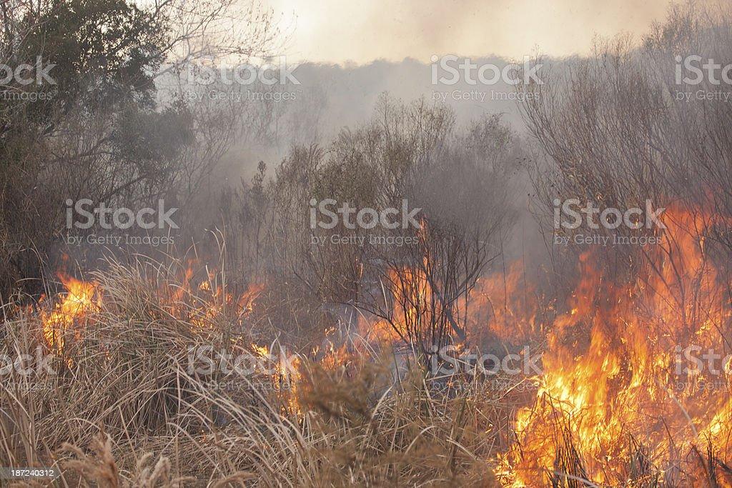 Fields on Fire stock photo