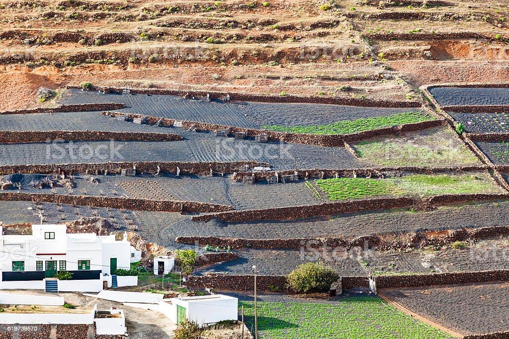 fields on lapilli, the soil on volcanic ground stock photo