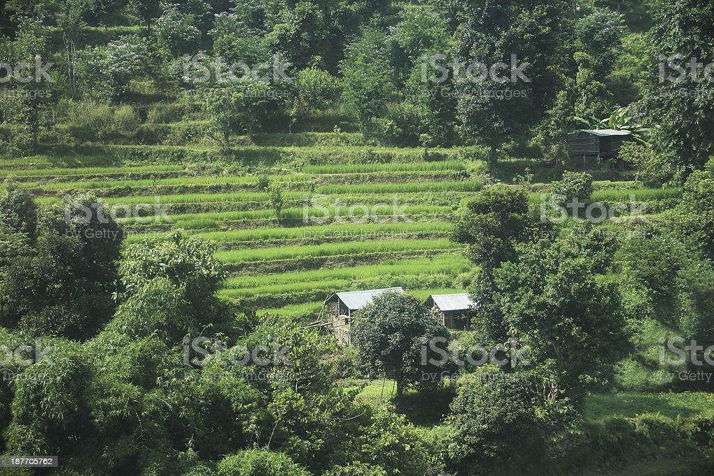 Fields on the slopes of Manakamana Mandir-Nepal. 0352 stock photo