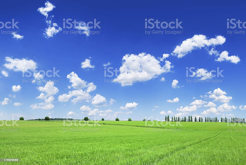 Fields, the blue sky and white clouds royalty-free stock photo