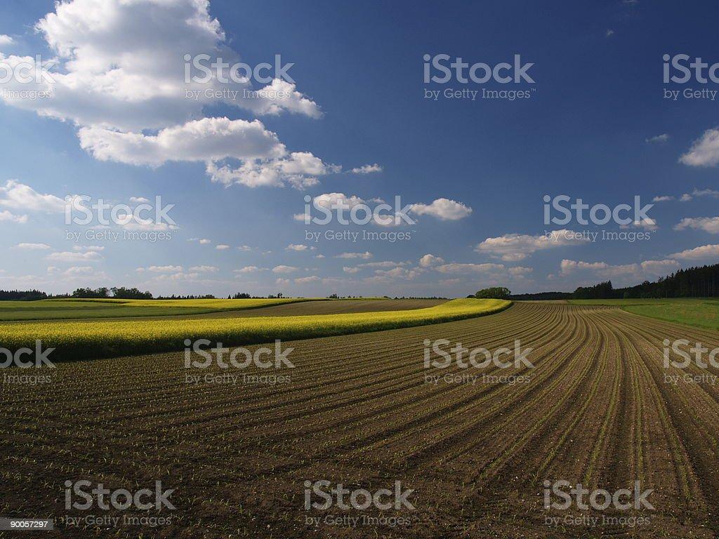 Fields with blue sky stock photo