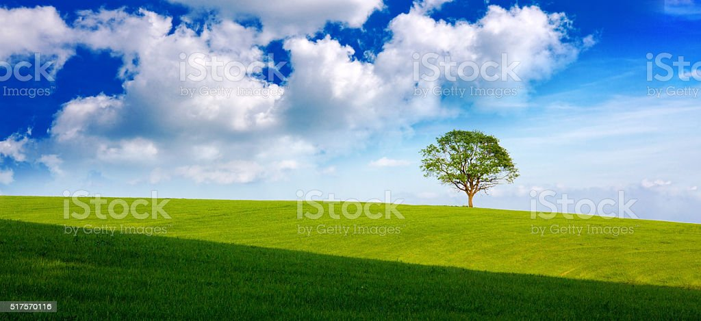 Field,tree and blue sky stock photo