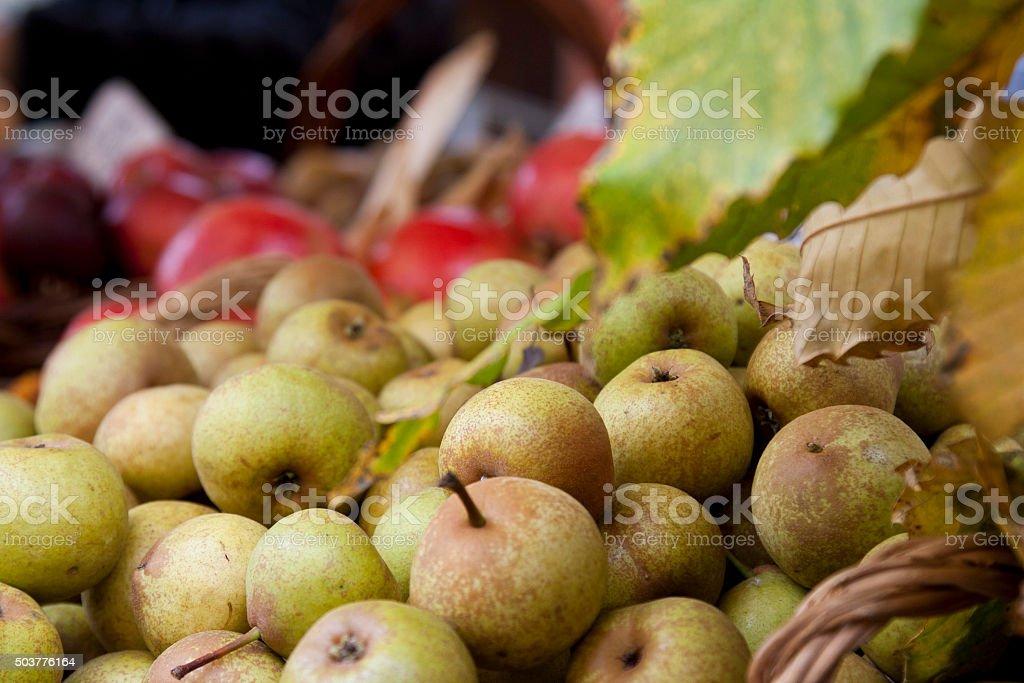 Fiera della Pera volpina stock photo