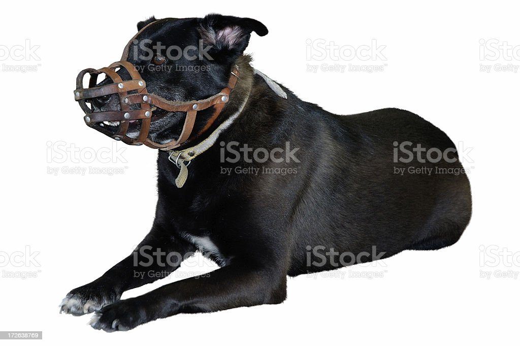 Fierce Dog royalty-free stock photo