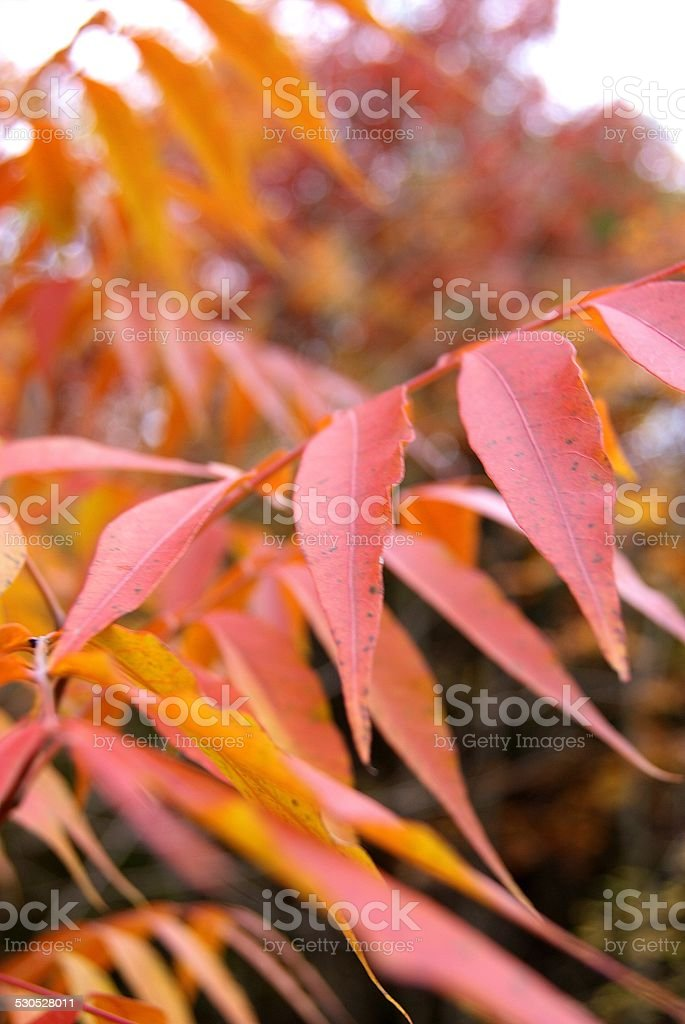 Fiery Red royalty-free stock photo