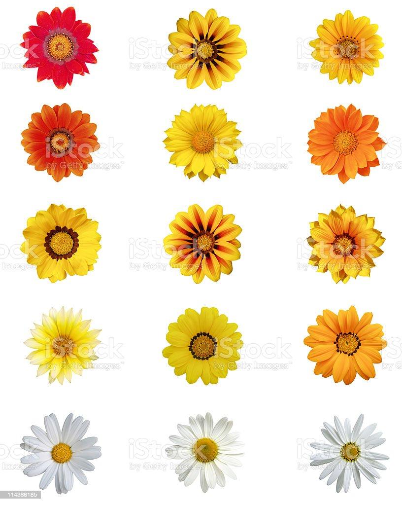 Fifteen different daisy blossoms XXXL+ stock photo