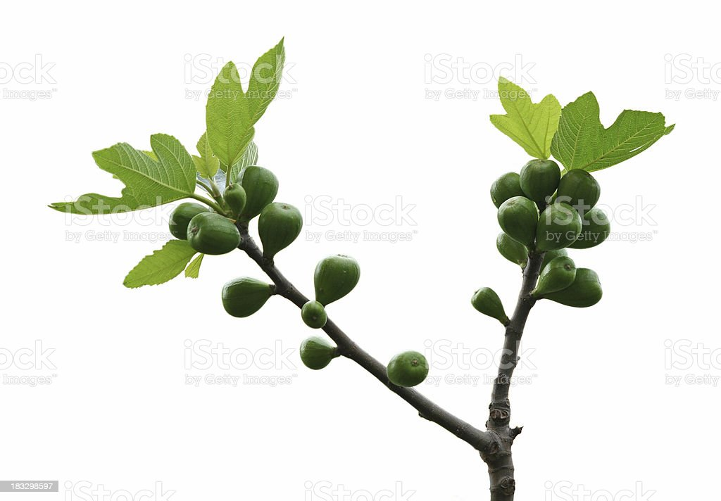 Fig isolated on white in Rome, Italy royalty-free stock photo