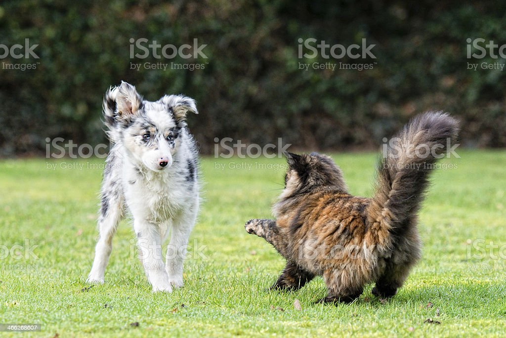 Fight like cat and dog! stock photo