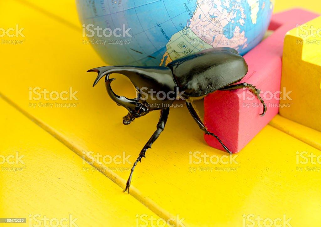 Fighting beetle (rhinoceros beetle) on the yellow table stock photo