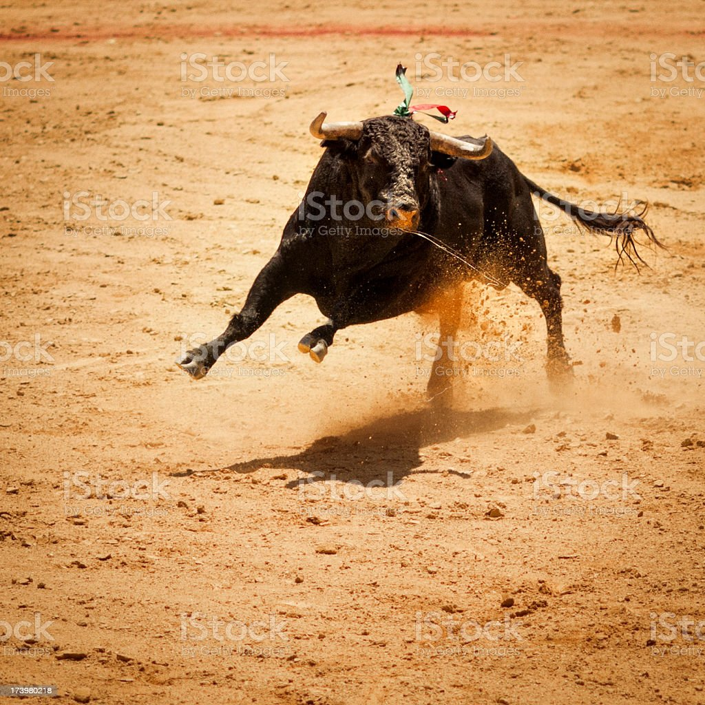 Fighting bull royalty-free stock photo