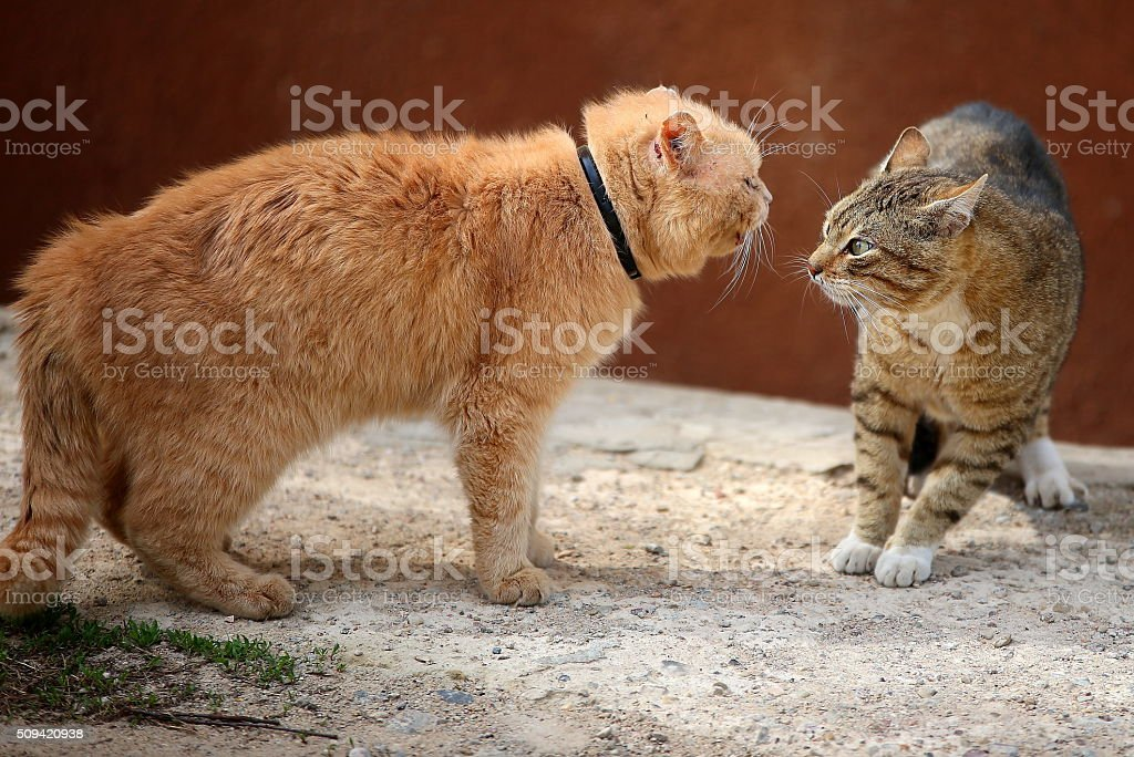 Fighting homeless cats stock photo