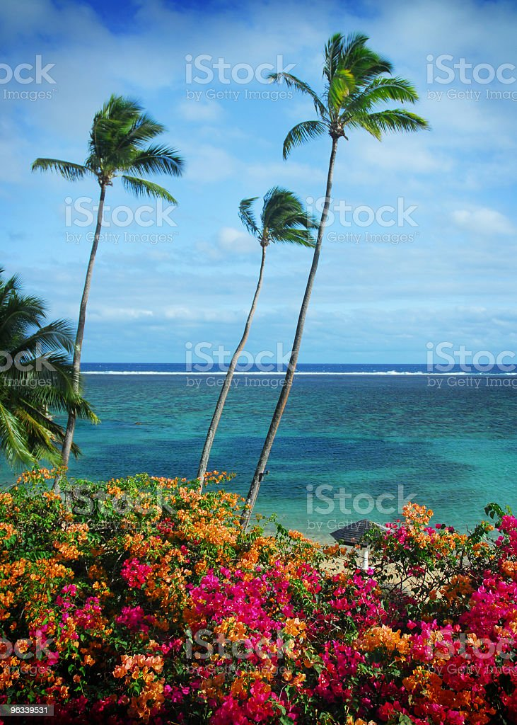 Fiji Palms stock photo