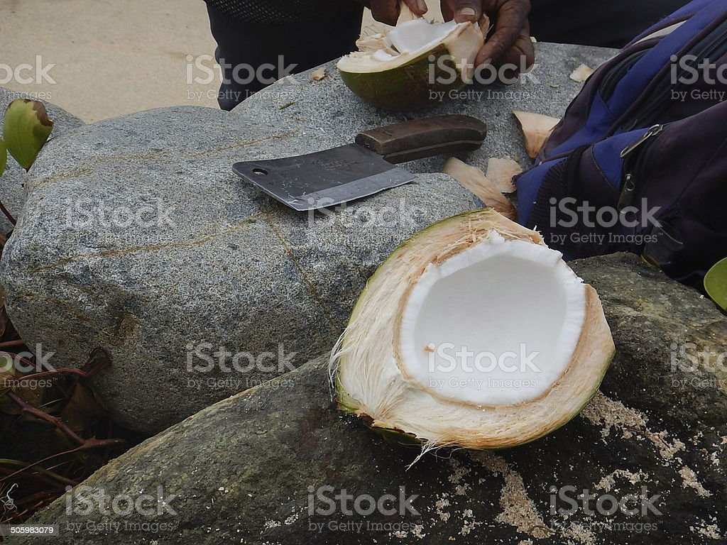 Fiji Village Man openinga fresh Green Coconut stock photo
