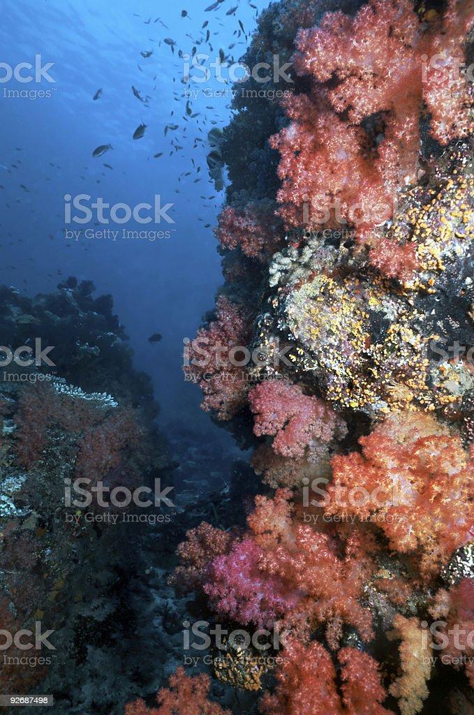 Fidjien délicats coraux photo libre de droits