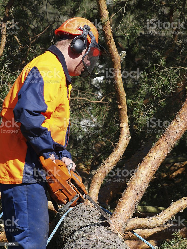 Filed down pine royalty-free stock photo