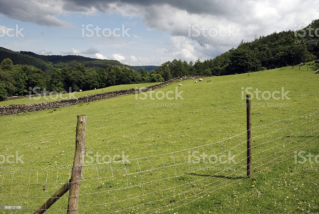 Fileld in Wales royalty-free stock photo