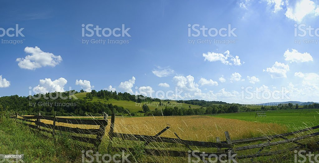 Fileld panorama in summer royalty-free stock photo