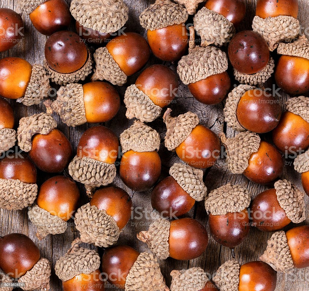 Filled Layout Of Autumn Acorn Decorations Royalty Free Stock Photo