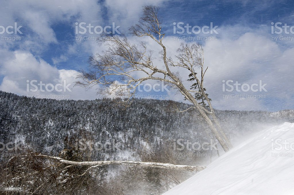 Filled the snow royalty-free stock photo