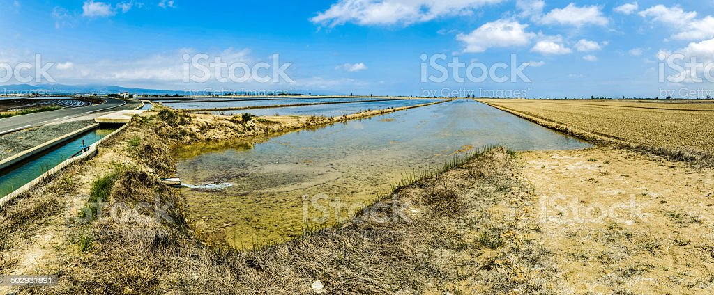filled with water at planting rice in delta del ebro stock photo