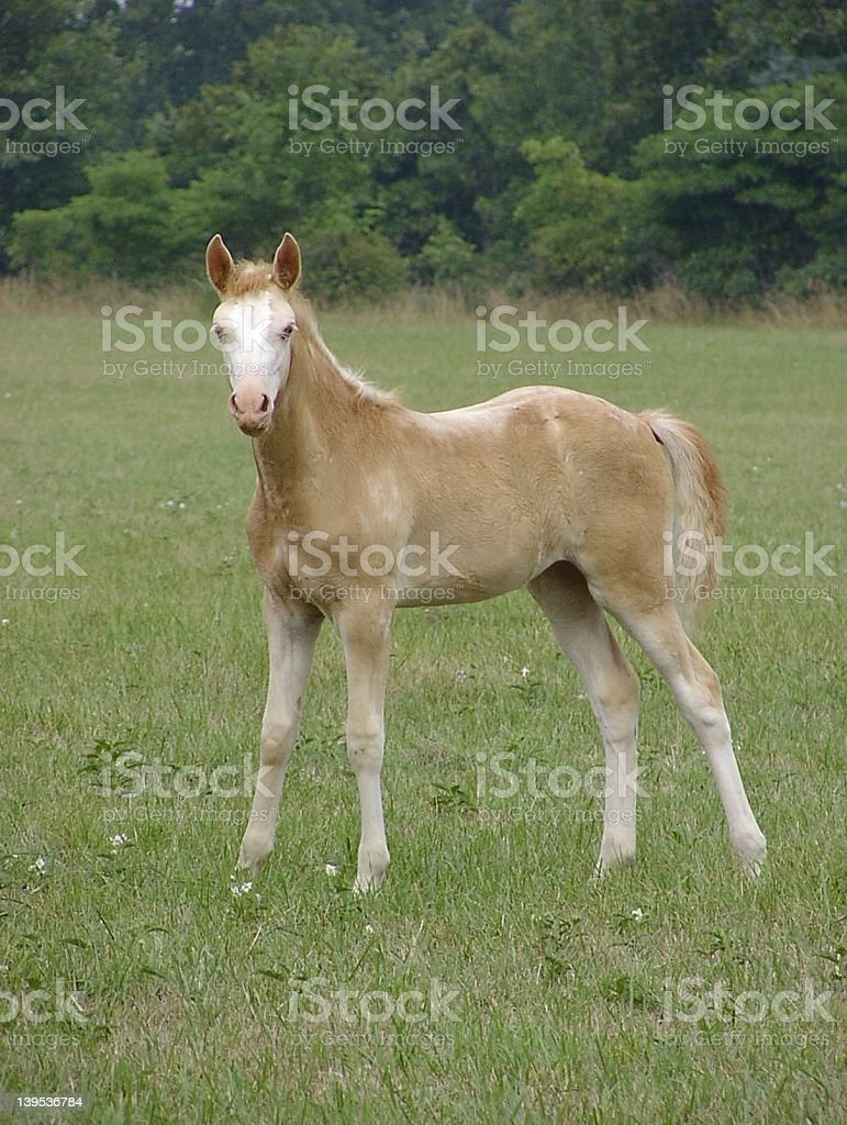 Filly stock photo