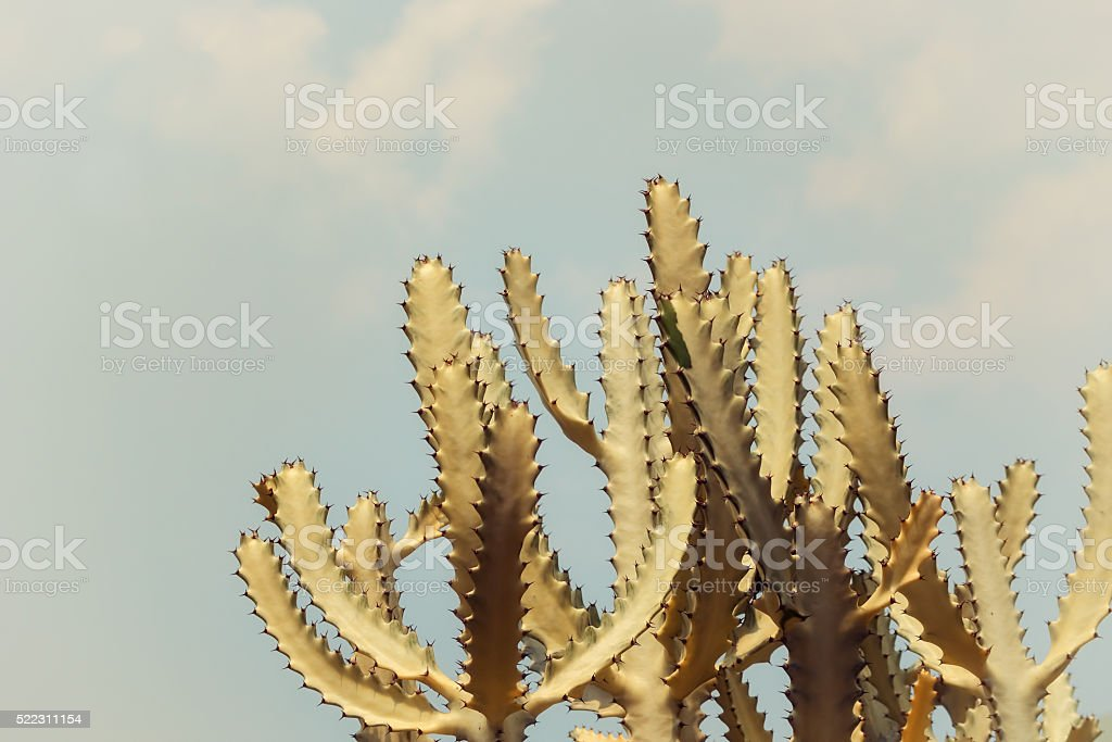 Filtered cactus against blue sky stock photo
