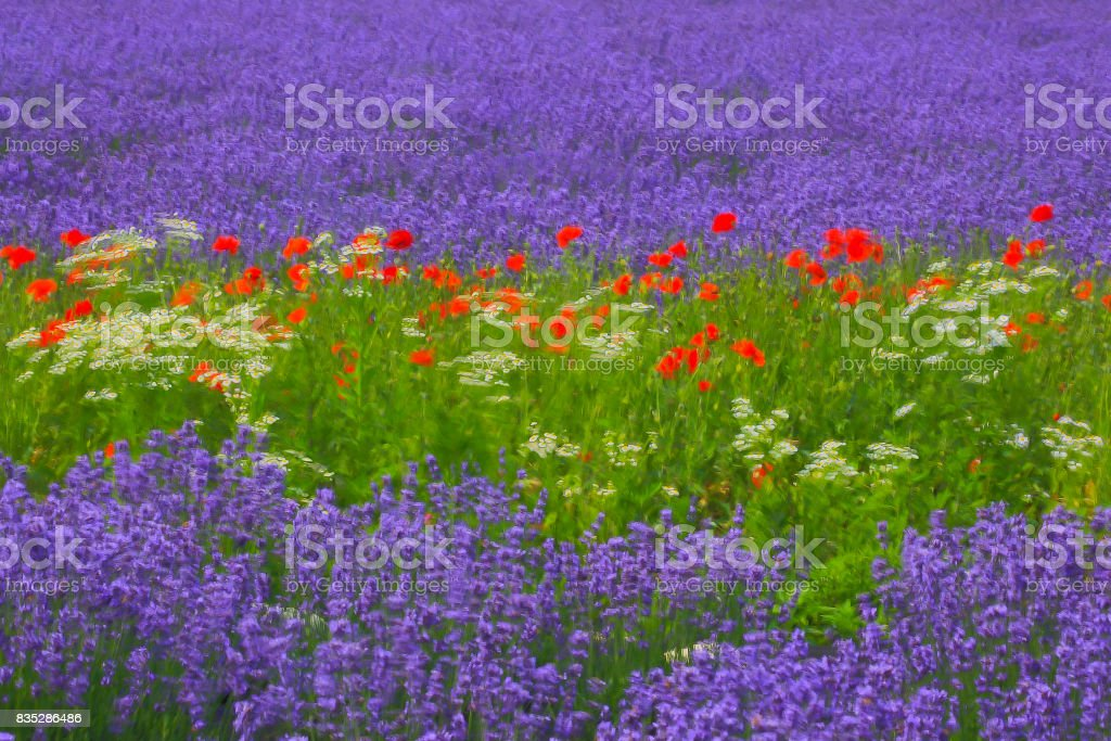 Filtered Photo of Flowers stock photo