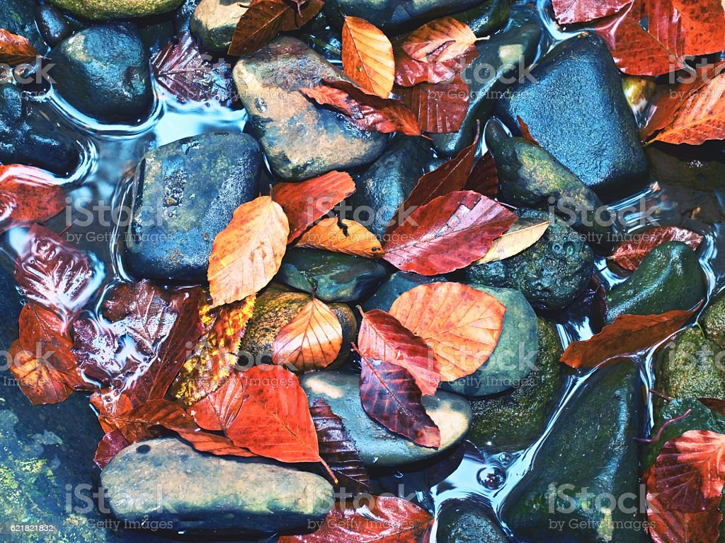Filtered photo.Gravel at mountain river covered with fall leaves stock photo