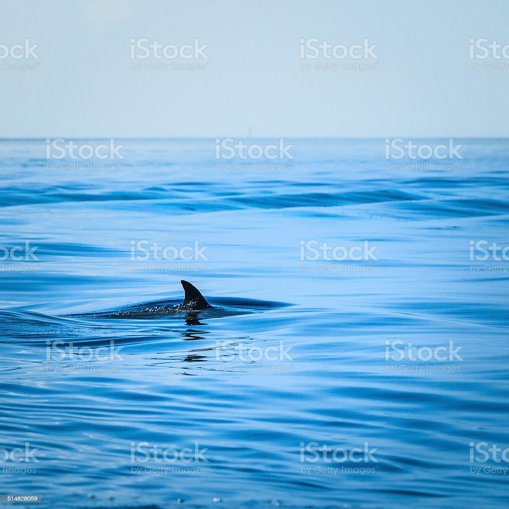 Fin of a shark in the high sea stock photo