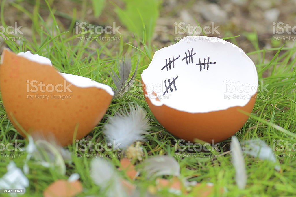Finally out of the egg after patience stock photo
