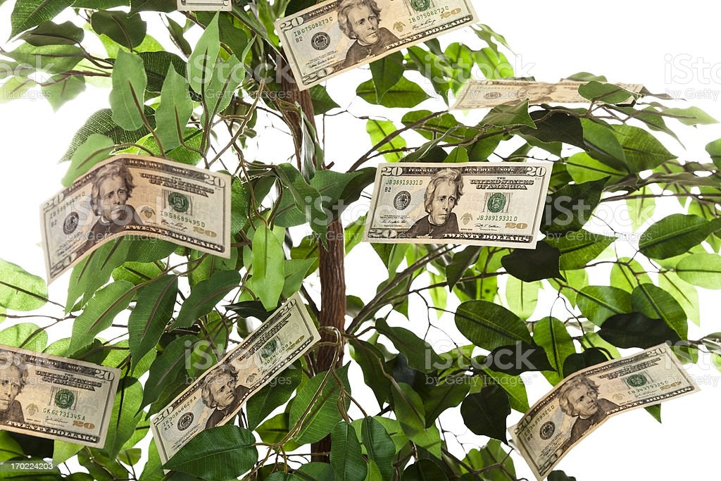 Finances:  Money growing on a tree. stock photo
