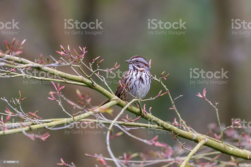 Finch on Thorned Tree in Golden Gate Park, San Francisco stock photo