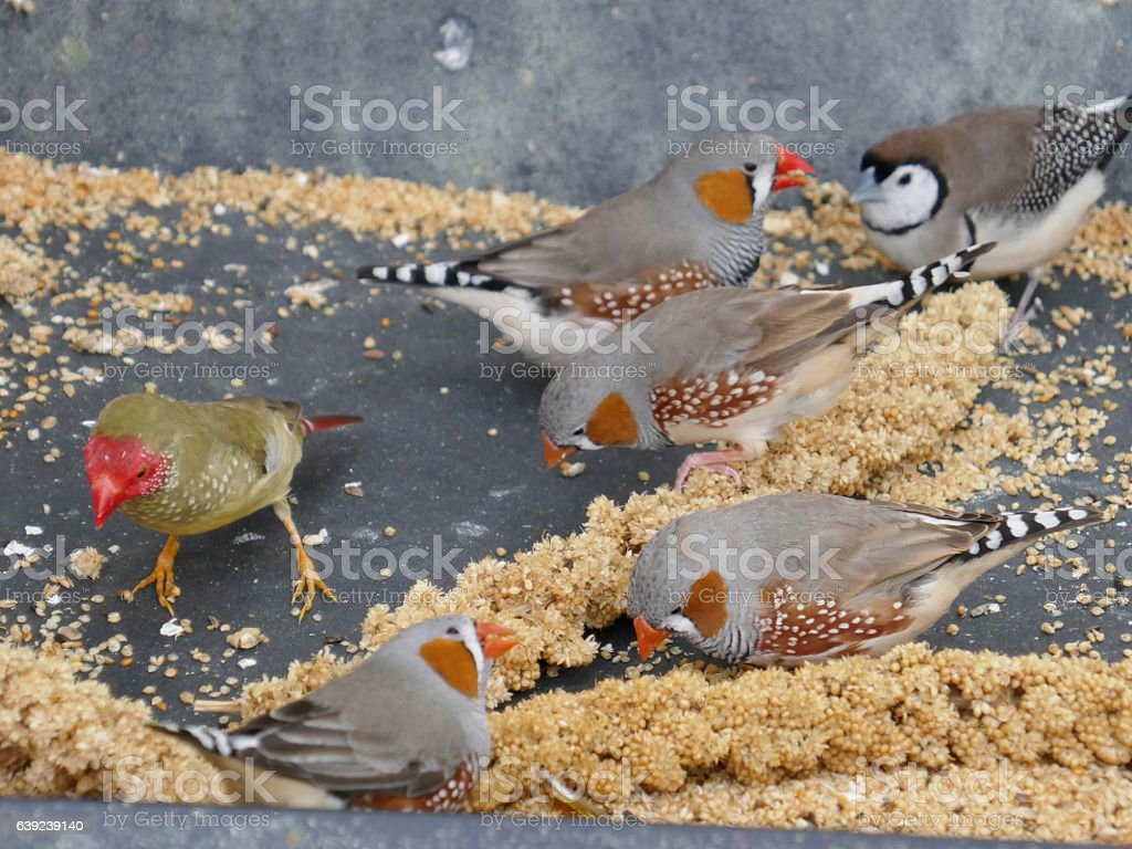 Finches stock photo