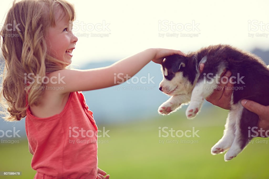 I find fluffy friend stock photo