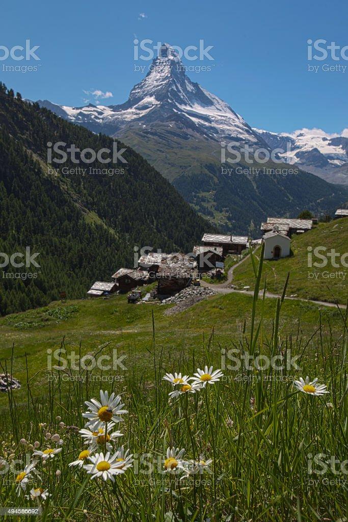 Findeln Flowers to the Matterhorn stock photo