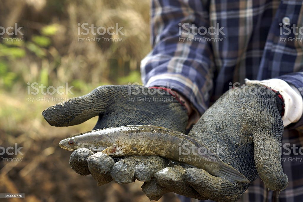 Finding A Mud Fish stock photo