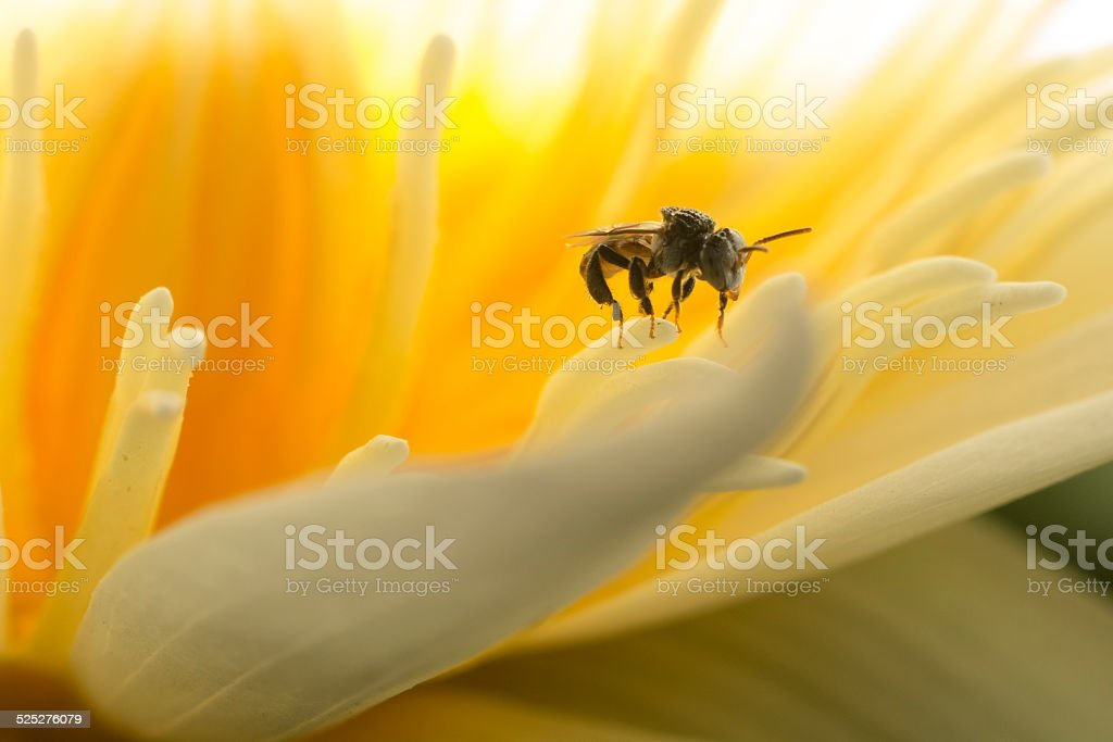 Finding nectar royalty-free stock photo