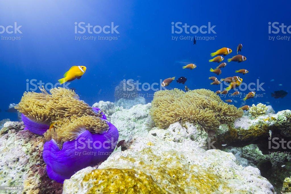 Finding Nemo stock photo
