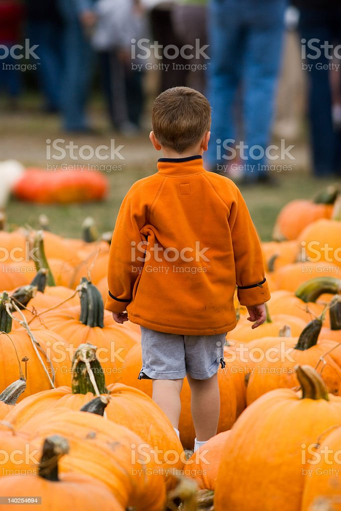 Finding the Perfect Pumpkin royalty-free stock photo